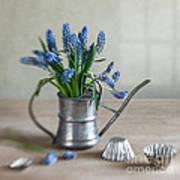 Still Life With Grape Hyacinths Art Print