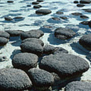 Stromatolites Art Print by Georgette Douwma
