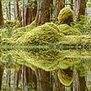 Swamp Art Print by David Nunuk