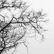 Tree Against A White Sky In The Early Morning Hours Art Print by Gal Ashkenazi
