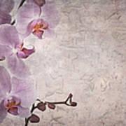 Vintage Orchids Art Print by Jane Rix