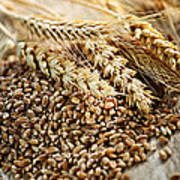 Wheat Ears And Grain Art Print by Elena Elisseeva
