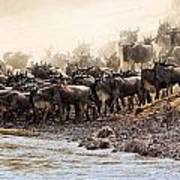 Wildebeest Before The Crossing Art Print