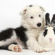 Puppy And Rabbit Art Print
