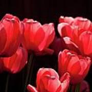 2012 Tulips 02 Art Print
