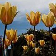 2012 Tulips 06 Art Print