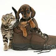 Kitten And Puppy Art Print by Jane Burton