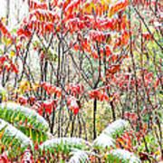 Autumn Snow Monongahela National Forest Art Print