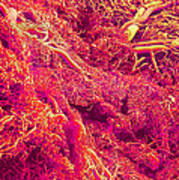 Blood Vessels, Sem Art Print
