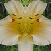 Angelic Lily Art Print