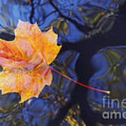 Autumn Leaf On The Water Art Print