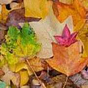 Autumn Leaves Art Print by Hans Engbers