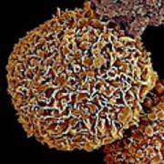 Breast Cancer Cell, Sem Art Print