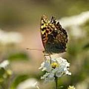 Butterfly On Blooming Flowers Art Print