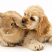 Cocker Spaniel And Rabbit Art Print