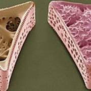 Diatoms, Sem Art Print