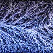 Electrical Discharge Lichtenberg Figure Art Print by Ted Kinsman