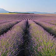 English Lavender Field, Valensole, Valensole Plateau, Alpes-de-haute-provence, Provence-alpes-cote D Azur, France Art Print