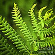 Fern Leaf Art Print