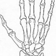 Hand And Wrist Bones Art Print