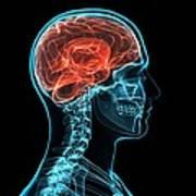 Head Anatomy, Artwork Art Print