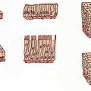 Illustration Of Epithelium Types Art Print