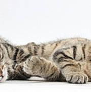 Kitten Companions Art Print