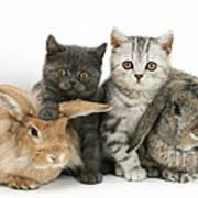 Kittens And Rabbits Art Print