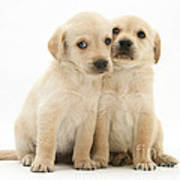 Labrador Retriever Puppies Print by Jane Burton