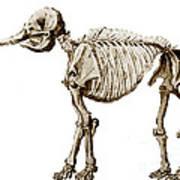 Mastodon Skeleton Art Print by Science Source
