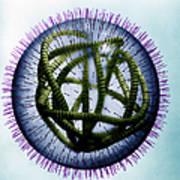 Measles Virus Art Print