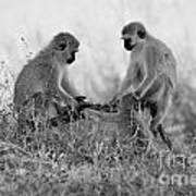3 Monkeys Hey Its Not A Wig Art Print