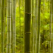 Mystical Bamboo Art Print