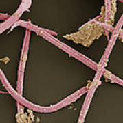 Nematode Worms, Sem Art Print