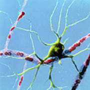 Nerve Cell Art Print