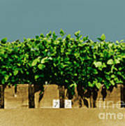 Photoperiodicity In Soybean Plants Art Print