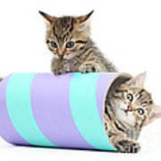 Playful Kittens Art Print