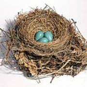 Robins Nest With Eggs Art Print