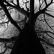 Tree Of Thorns Art Print