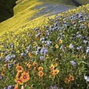 Wildflowers, California Art Print