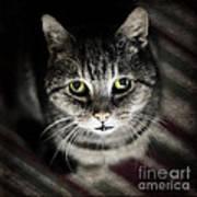 Wonky Eyed Tiger Art Print