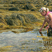 Young Girl Exploring A Maine Tidepool Art Print