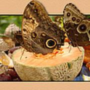 3d Owl Butterfly Art Print