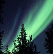 Aurora Borealis Above The Trees Art Print