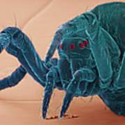 Baby Spider, Sem Art Print