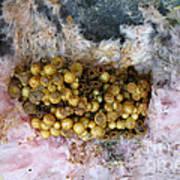 Bumblebee Nest Art Print
