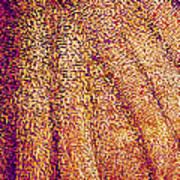 Butterfly Wing, Sem Art Print