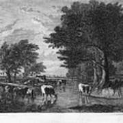 Cattle, 19th Century Art Print