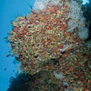 Colourful Reef Scene, Ari And Male Art Print