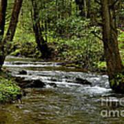 Craig Run Monongahela National Forest Art Print